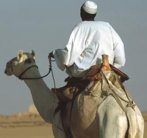camel-223013_960_720